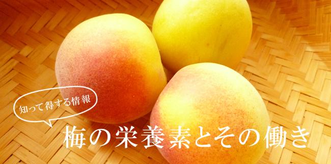 梅の栄養と効果